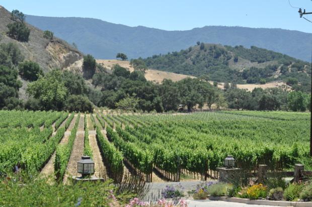Vineyards of Santa Ynez Valley
