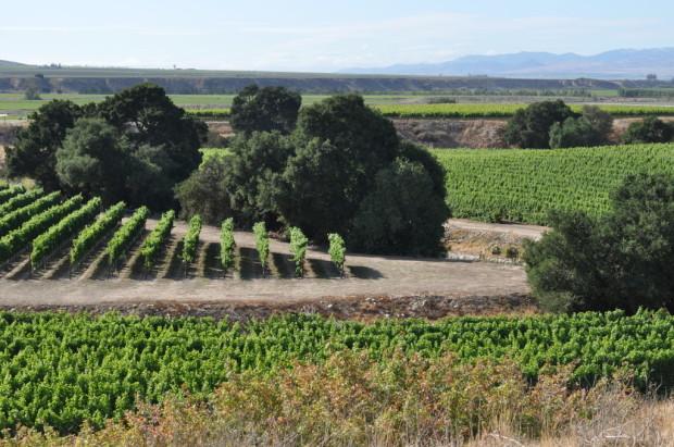 Griva Vineyard