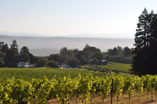 The inversion layer over Vanderkamp Vineyard