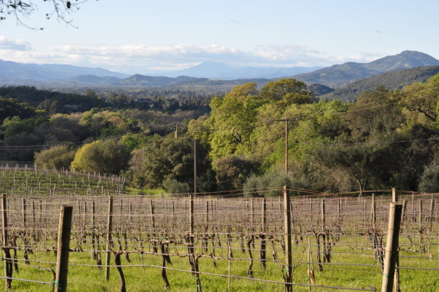 Looking up Napa Valley from Farella Vineyards in Coombsville